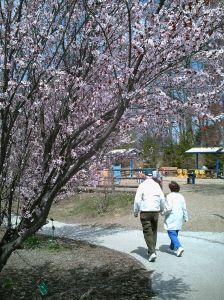 502438_spring_walk.jpg