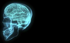 880737_brain_001.jpg