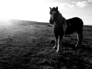 horseinfield.jpg