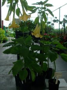 plantsale1