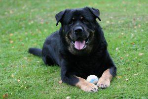 dog-1361477-300x200